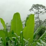 Brasilien Urwald